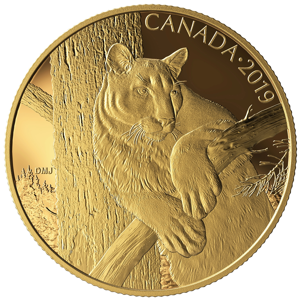 2019 350 Canadian Wildlife Portraits The Cougar Pure Gold Coin