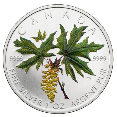 2005 $5 Bigleaf Maple: Coloured Maple Leaf - Pure Silver Coin (Discounted)