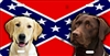 personalized novelty license plate 2 Labradors on a rebel flag car tag
