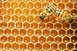 OD09508-FA18	$40.00	Eco-Logic: Bees and Pesticides w/ Rev. Billy, Mercy Van Vlack + Len Librizzi-DVD