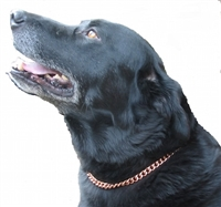 Copper Magnetic Therapy Dog Collar