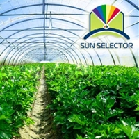 Sun Selector Clear Greenhouse Plastic Film, 6 mil, 4 year - Price Per Sq. Ft.