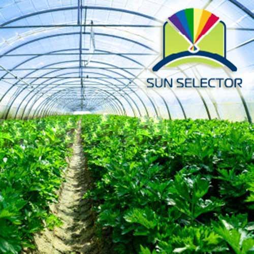Sun Selector Clear Greenhouse Plastic Film  Year Price Per Sq Ft
