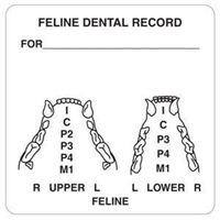 Feline Dental Record Label, 2-1/2 x 2-1/2, 390/RL (V-AN411)