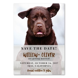 Dog Save the Date | The Labrador (100% recycled paper)
