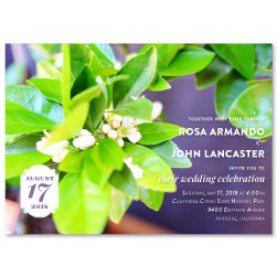 Lemon Tree Wedding Invitations | Citrus Blossoms