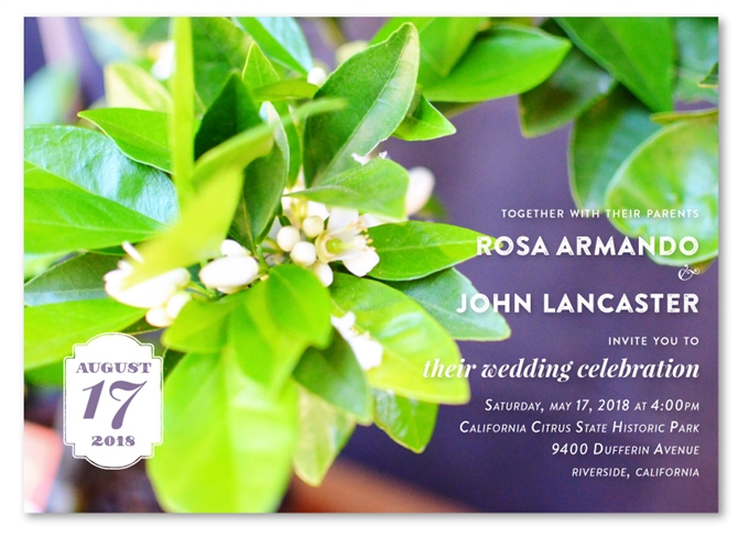 lemon tree wedding invitations citrus blossoms on 100 recycled