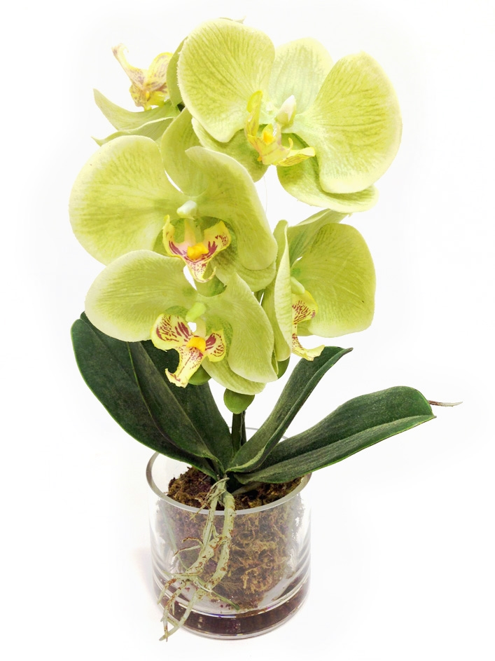 Real Touch Artificial Flower Phalaenopsis Orchid Flowers