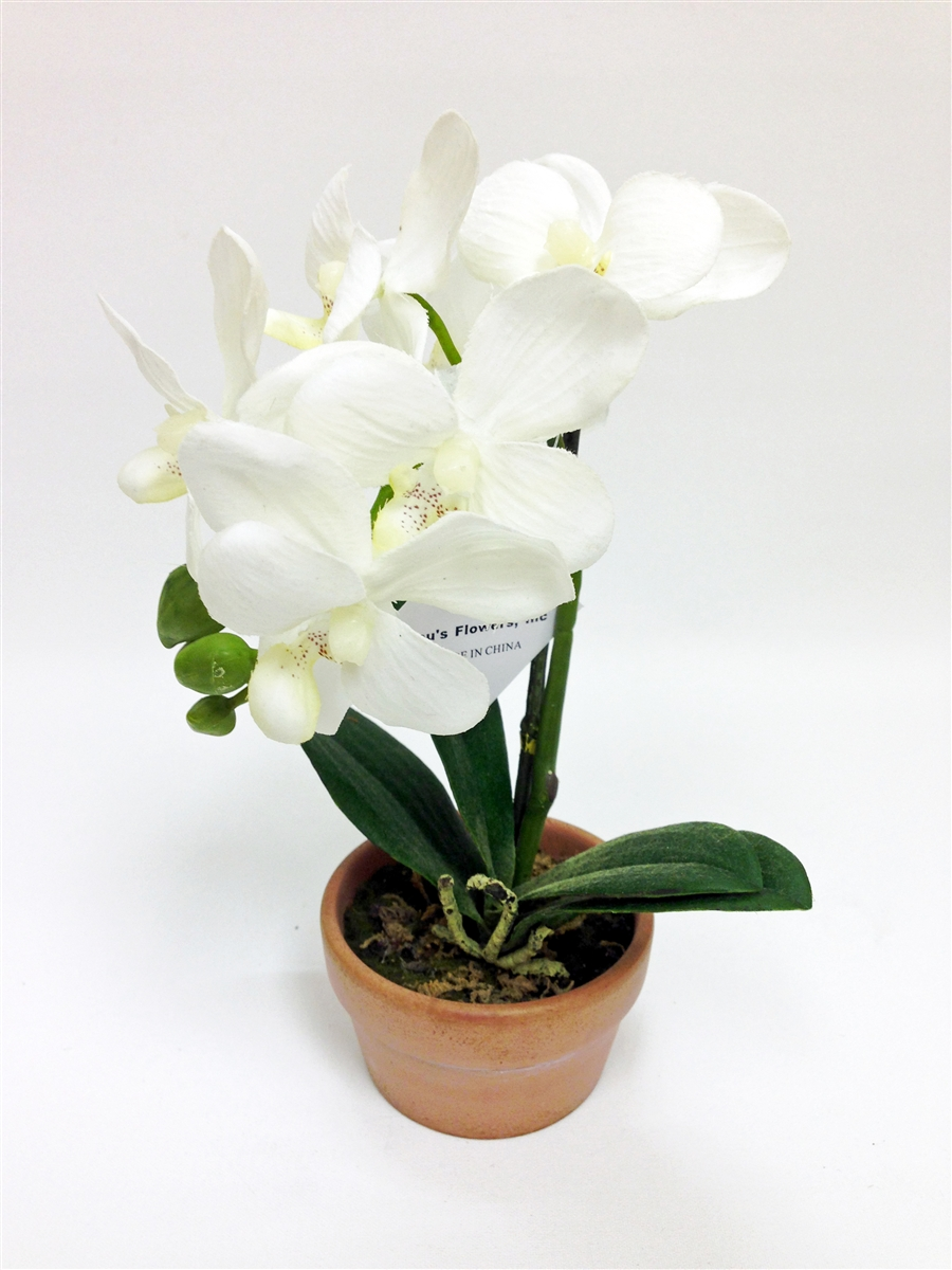 Phalaenopsis Orchid Silk Flower Arrangement Orchid Real Artificial