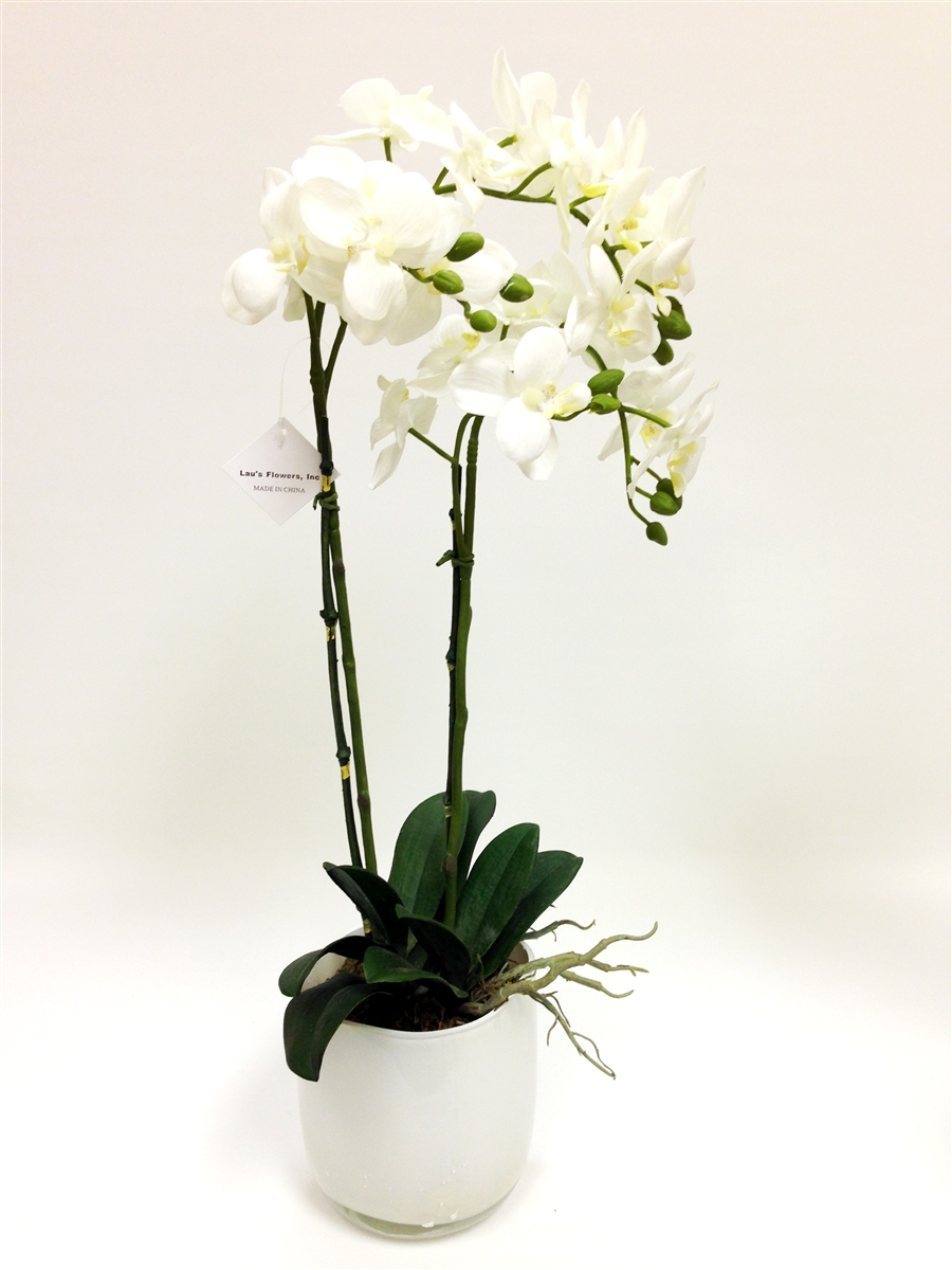 Phalaenopsis orchid silk flower arrangement phalaenopsis orchids 23 inch phalaenopsis orchid silk flower arrangement mightylinksfo Image collections