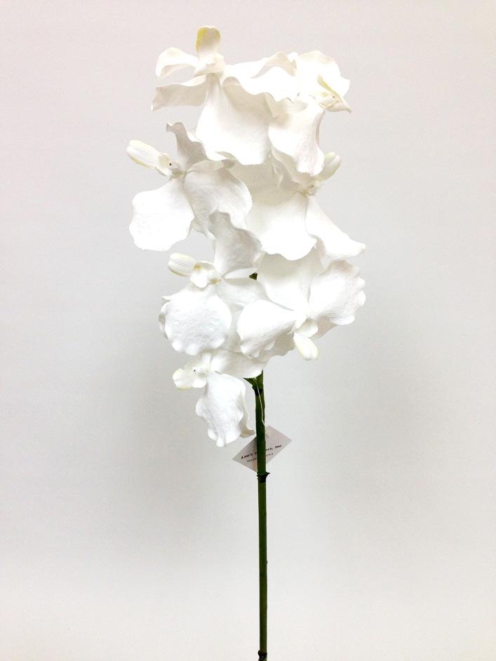 White Vanda Orchid Flower Stem