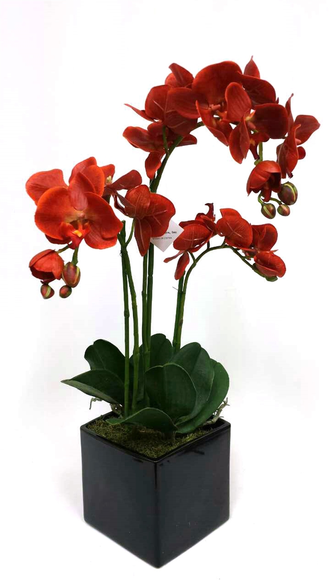 orange phalaenopsis orchid black ceramic pot