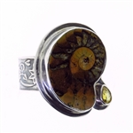 Tabra Ammonite and Citrine Ring