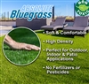 Absolute Bluegrass Synthetic Landscape Turf - 6 feet x 5 feet