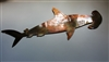 Hammer Head Shark Metal Decor 17""