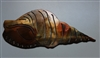 Seashell #2 Metal Wall Art Decor