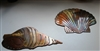 Seashell Set Copper/Bronze plated Metal Art