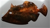 Trigger Fish Metal Wall Art Accent