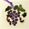 Grape Suncatcher