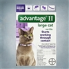 Advantage II Purple (Cats 9+ lbs) 6 pack