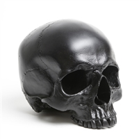 Full size Human Skull Maxilla in Blackened Stainless Steel