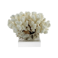 Cluster Coral