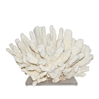 Catspaw Coral