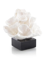 Foliose Coral on Black Marble