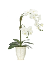 Orchid Phalaenopsis, White, Ceramic Planter Antique