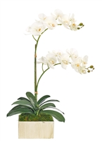 Orchid Phalaenopsis, White, Square Slate Finish