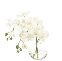 Orchid Phalaenopsis, White, Glass Decanter