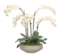 Orchid Phalaenopsis, White, Bowl Concrete Finish