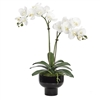 Cream White Orchid w/ Footed Bowl