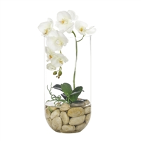 White Orchid w/ Glass Cylinder