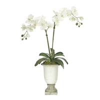 White Orchid w/ Ceramic Urn