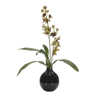 Ansellia Orchid w/ Black Glass