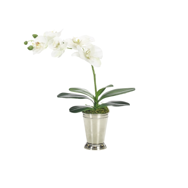 Orchid Phalaenopsis w/ Silver Tumbler
