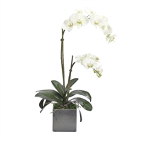 White Orchid w/ Ceramic Cube