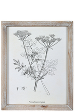 "UTC17510 Wood Rectangle Wall Art with Washed Frame and ""Petroselinum Crispin or Parsley"" Printed Rough Finish White"