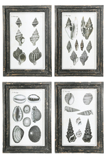 UTC17902-AST Wood Rectangle Wall Art on Distressed Frame with Glass, Different Kinds of Shells Printed Design and Metal Back Hangers Assortment of Four Painted Finish Gray