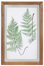 "UTC57810 Wood Rectangle Wall Art of ""1855 Ferns of Great Britain and Ireland by T. Moore"" with Glass and Small Metal Back Sawtooth Hanger Natural Finish Brown"