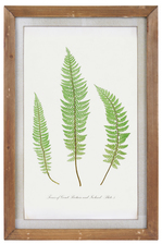"UTC57811 Wood Rectangle Wall Art of ""1855 Ferns of Great Britain and Ireland Plate 5 by T. Moore"" with Glass and Small Metal Back Sawtooth Hanger Natural Finish Brown"