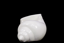 UTC73107 Ceramic Conch Seashell Figurine SM Ribbed Gloss FInish White