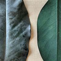 Magnolia Leaves Green