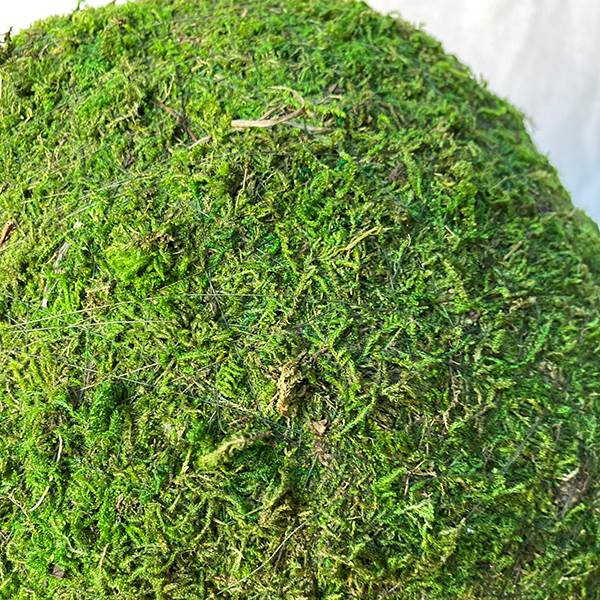 Moss Ball 4 Inches Green