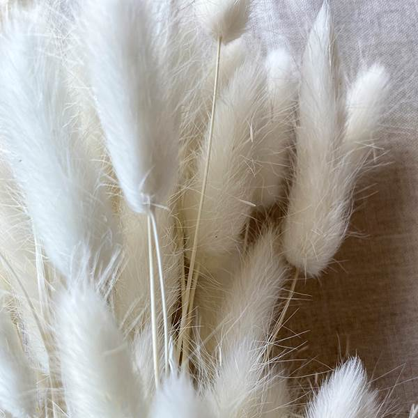 Bunny Tails Bleached