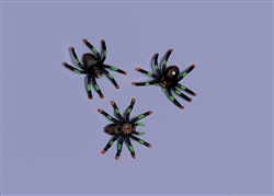 Assorted Plastic Spider