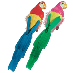 Feathered Parrots