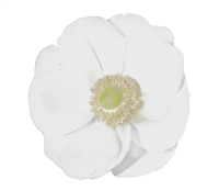 Anemone Marianne Plus White
