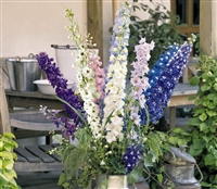 Delphinium P.G Round Table Mix